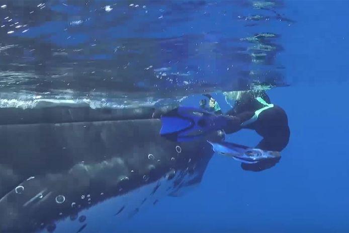 Op het filmpje is te zien hoe de walvis de biologe wegduwt.
