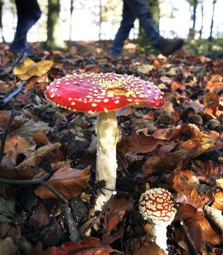 Verveel je je? Ga deze herfst eens op paddenstoelen-expeditie