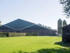 Omstreden megastal bij Geesteren mag toch uitbreiden