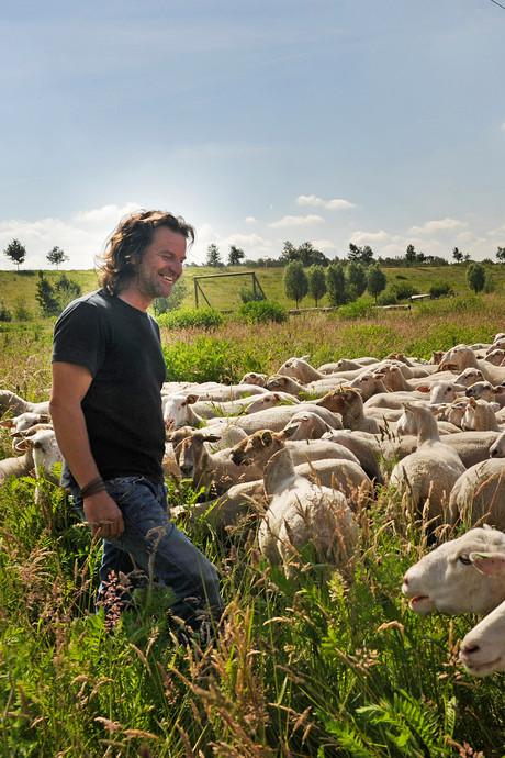 Schaapherder gezocht in Nunspeet