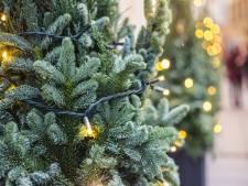 'Zo brutaal!', dieven met bestelauto stelen drie kerstbomen in winkelstraat Sint-Annaland