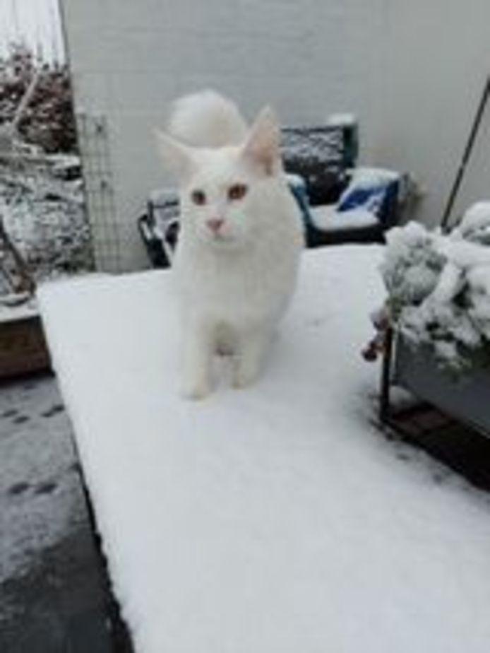 Jax maakt kennis met de sneeuw.