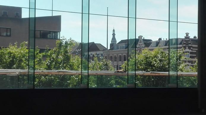 Wat ligt daar op dat gekunstelde afdak boven de fietsenstalling in Breda? Een Chinese gans.
