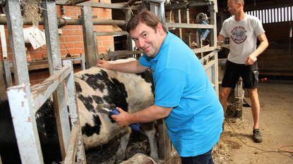 Bart Dochy op stage bij vleesveebedrijf