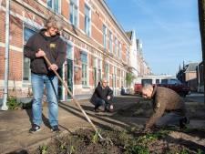 Gezamenlijke plantenvakken in de wijk maken Breda groener
