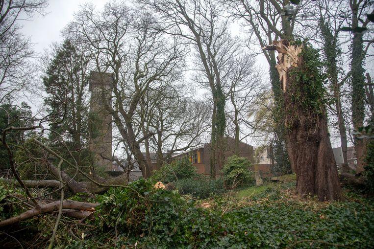 Stormschade Wetteren : een 150 jaar oude boom is geveld in de tuin van restaurat L'Esco.