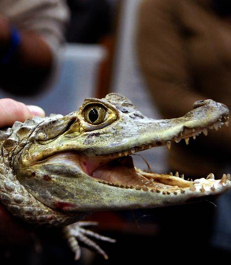Kamervragen over reptielenbeurs in Houten: 'Niet verstandig in coronatijd'