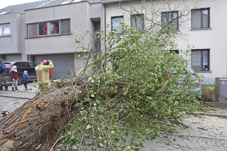 MERCHTEM: De boom belandde op een geparkeerde auto