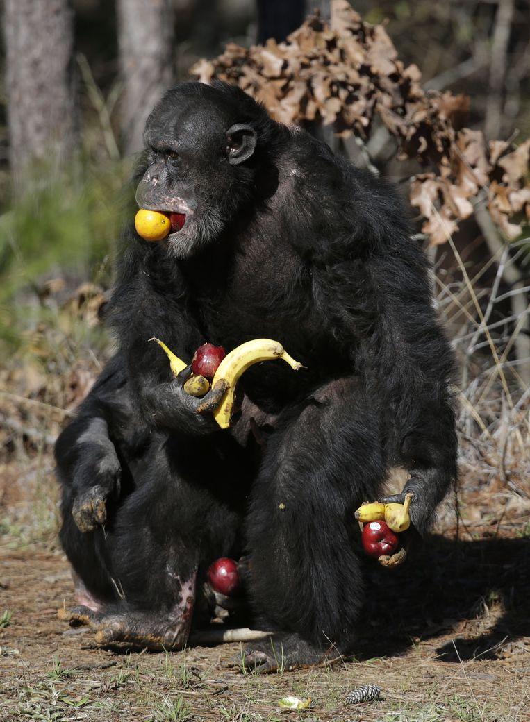 Een chimpansee. Beeld AP