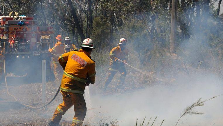 Brandweermannen aan het blussen. De bosbranden rond Sydney zijn de ergste in 10 jaar Beeld epa