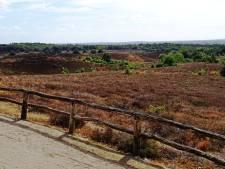 Door aanhoudende droogte dit jaar geen paarse Posbank