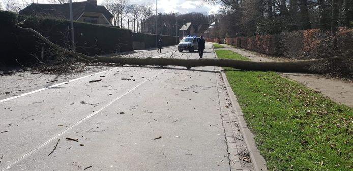 Aan het Sterrebos in Rumbeke kwam een boom over de weg te liggen.