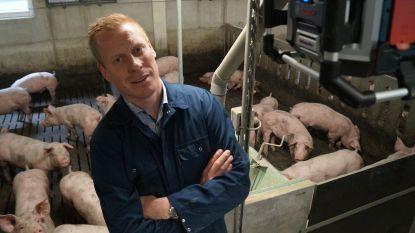 """VIDEO. Coldplay en Bruce Springsteen verjagen stress bij varkens van Aarseelse kweker: """"Gelukkige dieren leveren lekkerder vlees"""""""