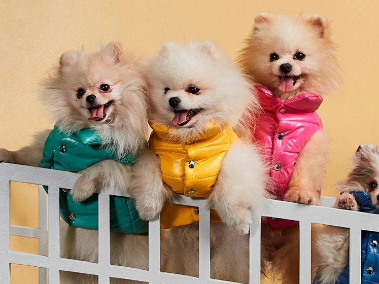 Mode voor honden zit in de lift, maar is je huisdier wel blij met zo'n jas of kersttrui? Dierendokter Joshua Dutré licht toe