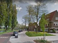 Gevaarlijke populieren in Zwolle worden gekapt