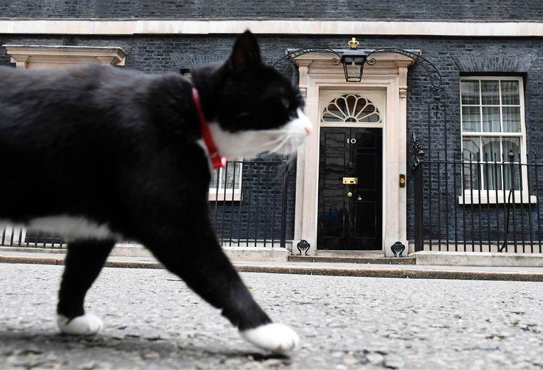 Een kat loopt langs Downing Street nummer 10. Deze kat is niet een van de slachtoffers van de kattenmoordenaars in Croydon.  Beeld AFP