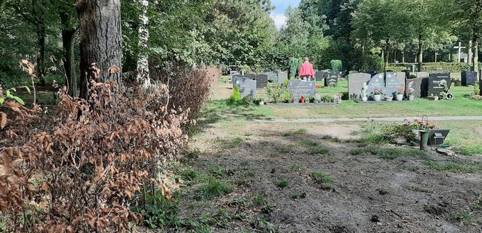 Een dorre hoek op begraafplaats 't Loo.