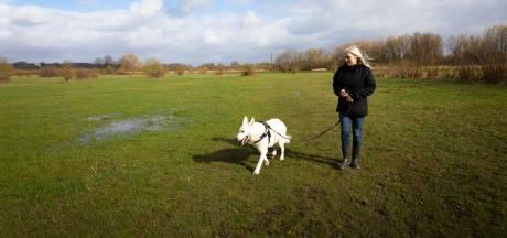 Meer geld voor controle op loslopende honden in Wageningse uiterwaarden