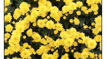 Bloemen vanaf 3 december verwijderd van graven
