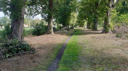 Wandeldreef Soldatenbos opnieuw open voor publiek