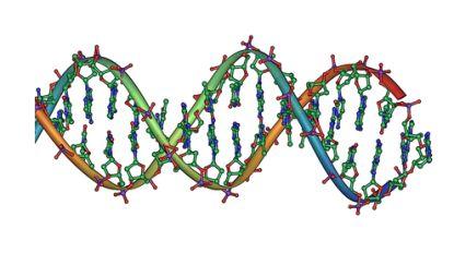 Experts ontdekken 'gereedschap' om DNA te herstellen