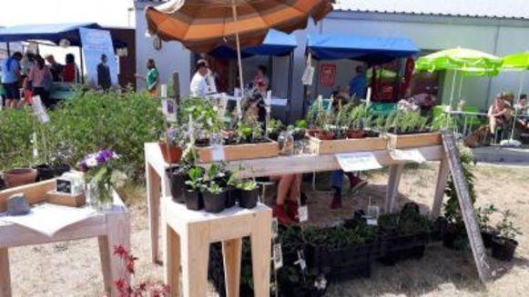 Op zondag 9 juni is er de jaarlijkse Bio Ecomarkt aan Ter Walle.