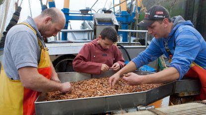 Eerste rapport over Noordzee: nog genoeg garnalen om een tomaat te vullen, maar hoe lang nog?