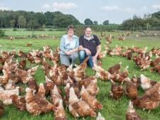 Kippenstallen van eierboer uit Terschuur 'eindelijk' fipronil-vrij