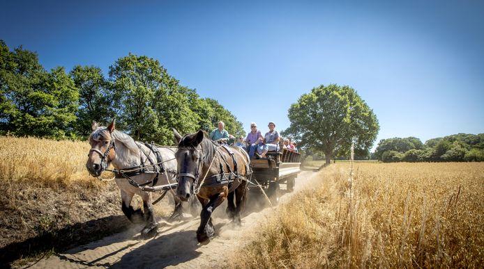 Met paard en wagen door het Springendal.  Koetsier Hennie geeft tekst en uitleg over de omgeving.