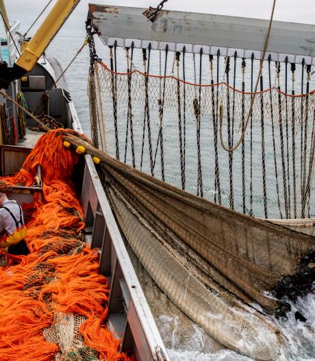 EU-lidstaten voor verbod pulsvisserij