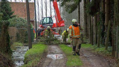 Brandweer heeft handen vol met omgewaaide bomen