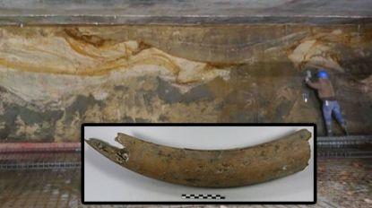 Resten van mammoet ontdekt bij Brussel-Noord