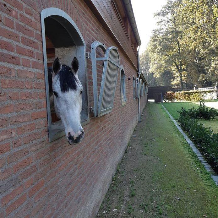 De inbrekers lieten het paard staan.