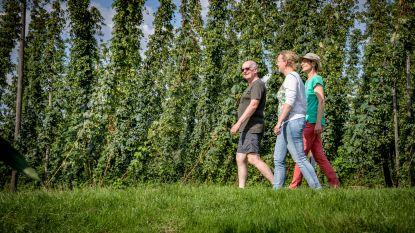 Oudste hopregio van Vlaanderen (H)Op Smaak gebracht tijdens nieuw pluksezoen