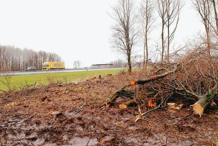 Een eerdere bomenkap langs de A6 in de Noordoostpolder.