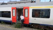 Ondertussen langs de 'groene sporen': conducteur wurmt zich door onkruid het treinstel in