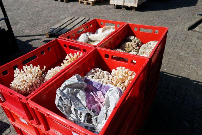 Beelden van vondsten van de inval bij groothandel TimmersGems in Berghem.