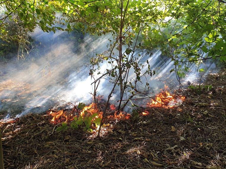 De bosbrand aan de Toekomstlaan