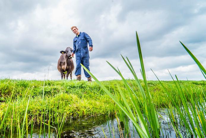 Dirk Gravesteyn in zijn weiland met een koe.