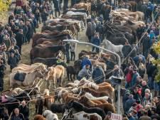 Het gaat weer spannen op de paardenmarkt in Hedel: na 300 jaar lijken tegenstellingen groter dan ooit