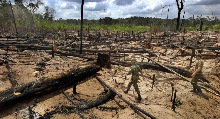 Braziliaanse politiemensen inspecteren een stuk grond in het Amazonegebied waar illegale houtkap heeft plaatsgehad. Brazilië voert een harde politiek tegen de ontbossing. Foto Raymond Rutting /de Volkskrant Beeld