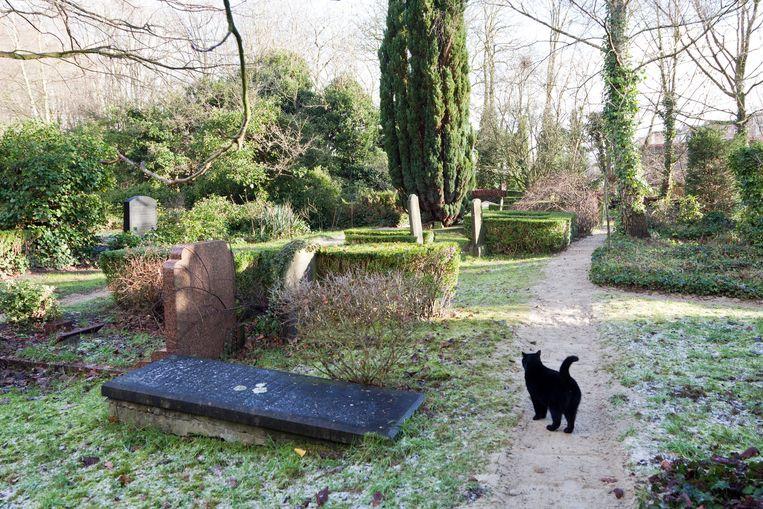 Begraafplaats Huis te Vraag Beeld Roï Shiratski