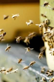 Cuijk zaait huurpercelen in voor bedreigde insecten en vogels