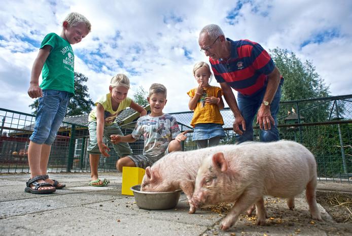Frans van Grinsven (rechts), vrijwilliger bij Stal Bertus voert samen een paar kinderen van de Albertusschool de mini-varkens.