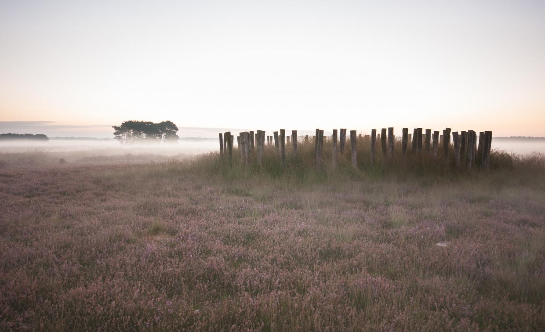 Gereconstrueerde prehistorische grafheuvels op de Rechte Heide bij Goirle (Noord-Brabant).