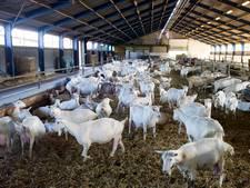 'Na Brabant ook in Gelderland verbod op nieuwe geitenstallen'