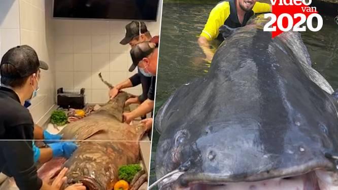 Van 'monster van Loch Ness' tot 2,4 lange meerval in Parijs: stem op dé 'vis' van het jaar