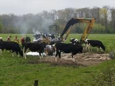 Koeien kijken toe terwijl graafmachine uitbrandt in Winterswijk