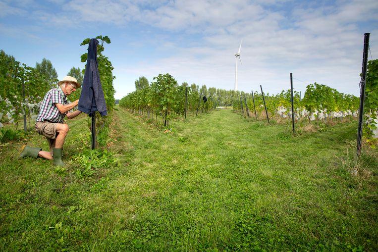 Duurzame wijnboer Johan Rippen. Beeld Herman Engbers