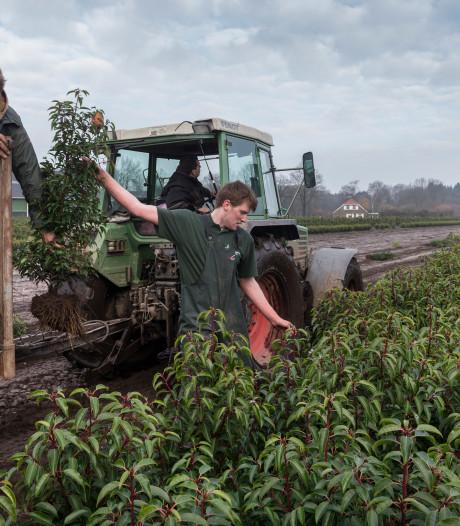 Prinsentuin College begint opleiding tot boomteler: 'Wij zijn de stoffeerders van het landschap'